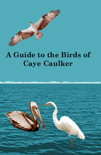 A Guide to the Birds of Caye Caulker